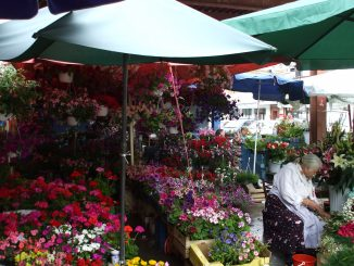 Amzei Flowers Market - 2008